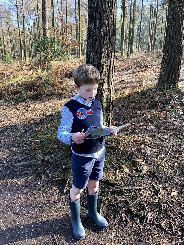 Adventures in the woods